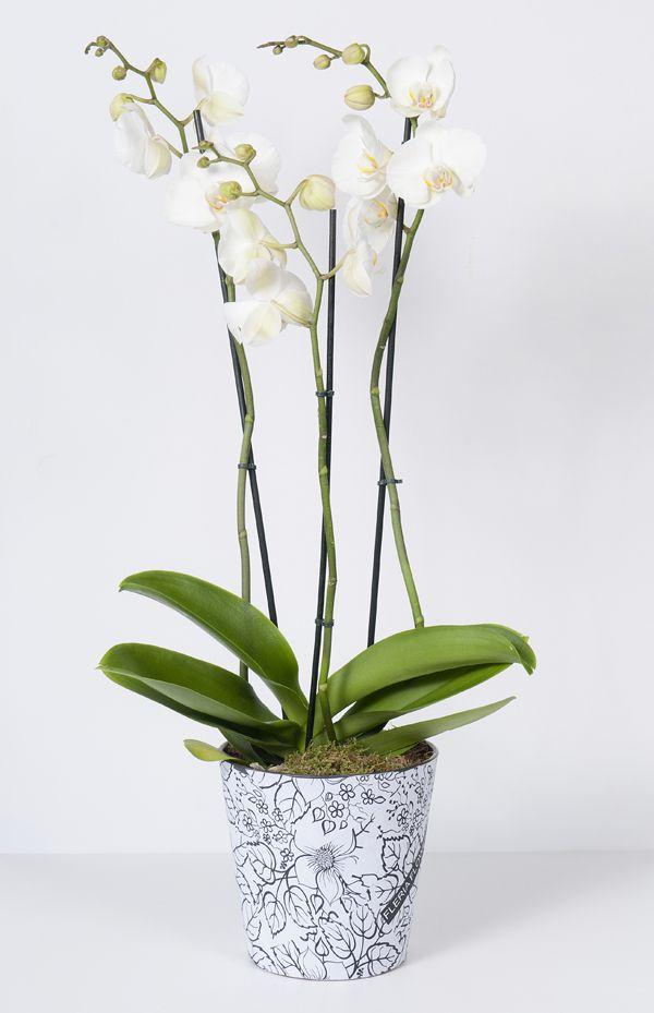 Black&white pots by Fleria team www.fleria.gr