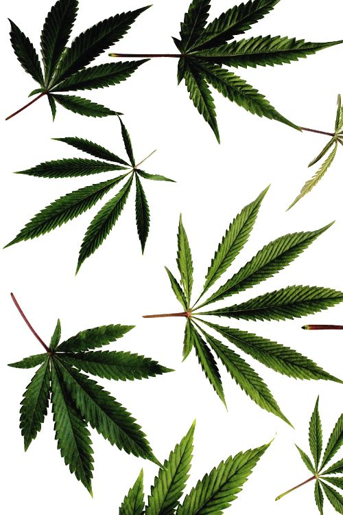 Think different: use edible marijuana! Love to smoke or vape marijuana, but can't in public? Make your own delicious Dragon Teeth mints or Cannabis chocolates; small candies you can take and use anytime, any place! MARIJUANA - Guide to Buying, Growing, Harvesting, and Making Medical Marijuana Oil and Delicious Candies to Treat Pain and Ailments by Mary Bendis, Second Edition. Just $2.99 for great e-book! www.muzzymemo.com