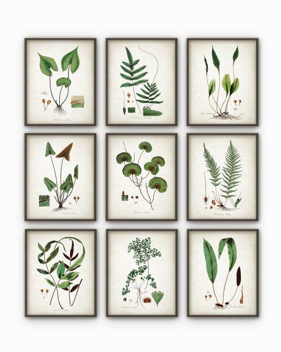 Verde planta sistema de decoración de pared de 9 - Arte Botánico AB74 carteles - planta antiguo libro placa ilustración láminas foto -  Imprimir utilizando tintas de archivo de alta calidad en papel pesado con un acabado mate suave. Un regalo fantástico o una adición fabulosa a su hogar!  Elija entre diferentes tamaños.  ---------------------------------------------------------------------------------------------  Para más impresiones botánicas y animales, por favor visitan…