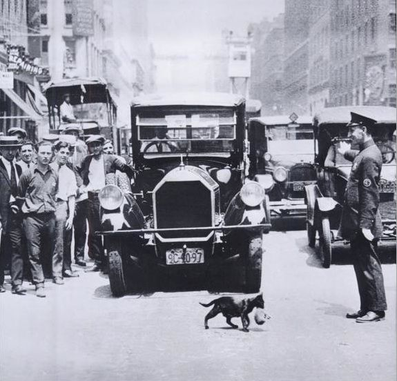 A cat carrying her kittens across the street stopped New York City traffic on July 29, 1925.