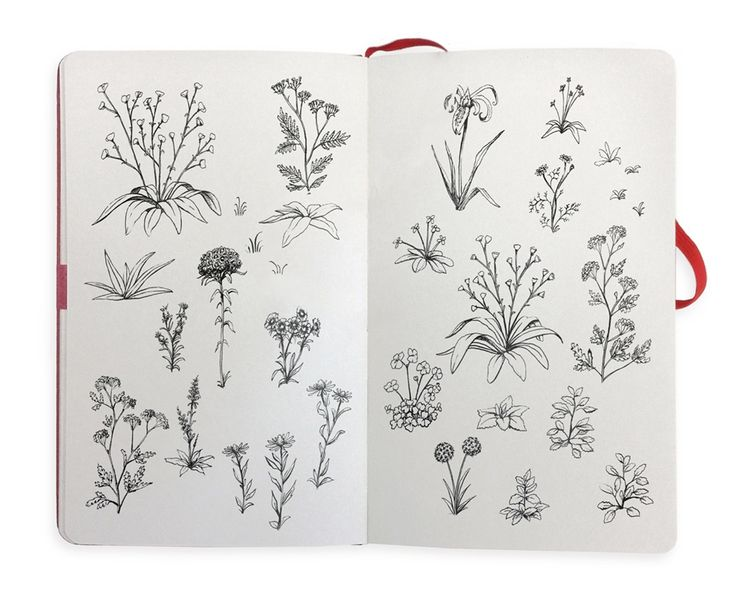 From the sketchbooks of the Paperless Post Botanical Society