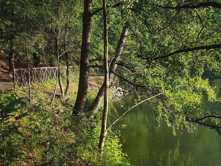 The Labuť Pond at Kunratický Forest in Krč Prague  #prague #travel #afternoon #kunratice #krc #wood #forest #kunratickyles #labut #pond #swan #lake #nature #galaxys6