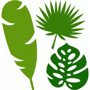 Plantilla hojas de palmera