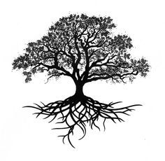 tree sketches with roots - Google Search