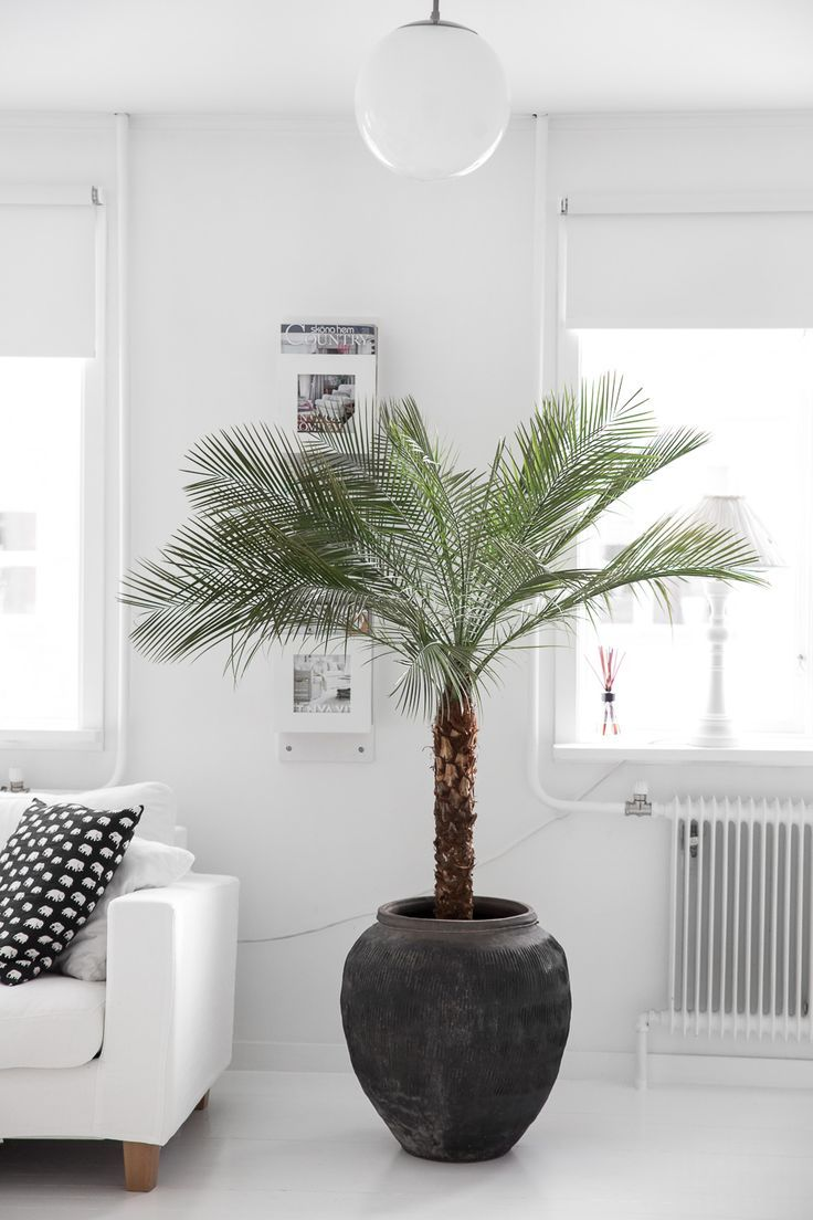 Nothing like a big ol' palm tree in your living room. @thecoveteur