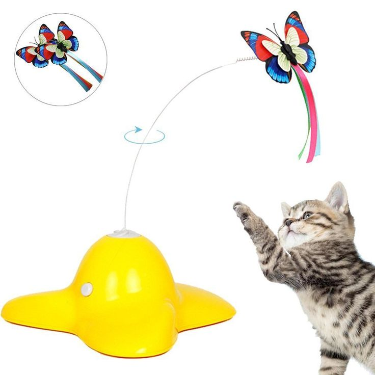 Best 25 interactive cat toys ideas on pinterest diy cat for Best motorized cat toys