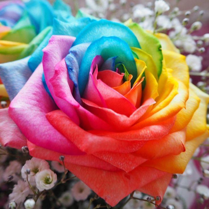カラフルな虹色の「レインボーローズ」というバラをご存知ですか?ビックリするような色の花ですが、なんとご自宅で簡単に手作りできるんですよ。まるで造花のようですが、正真正銘の本物のバラ。レインボーローズを使ったバラの花束はサプライズプレゼントにもぴったり!花言葉は「奇跡」と、ロマンチックなのも素敵。お部屋にインテリアとして飾るだけで非日常感の生まれる、アーティスティックな花の作り方をご紹介します。   ページ1