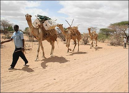 Camel library, Kenya
