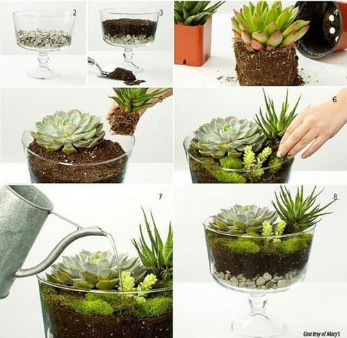 diy, decoration, and plants image
