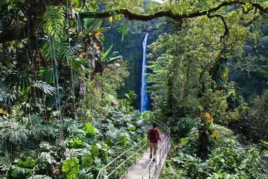 Path to Akaka Falls on Hawaii Island (Hawaii Tourism Authority/Tor Johnson best free activities on hawaii island)