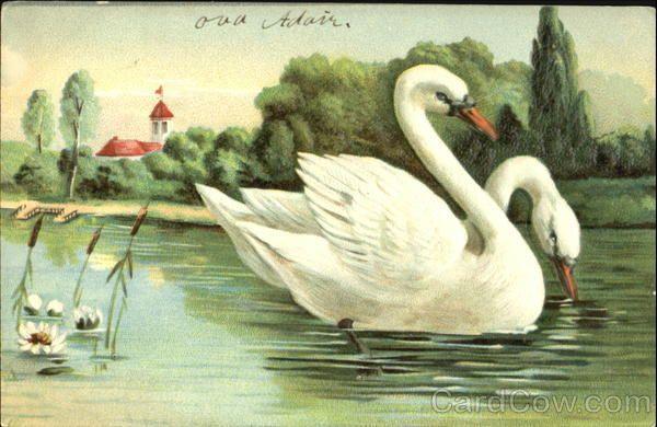Swans Birds