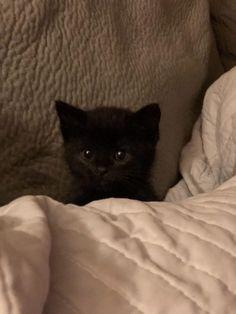 🐕🐈Fans von Kätzchen Meow? #CLICK #SAVE #FOLLOW #PIN #aninspiring, um zu überprüfen, ob …  – Cute Kitties Cats