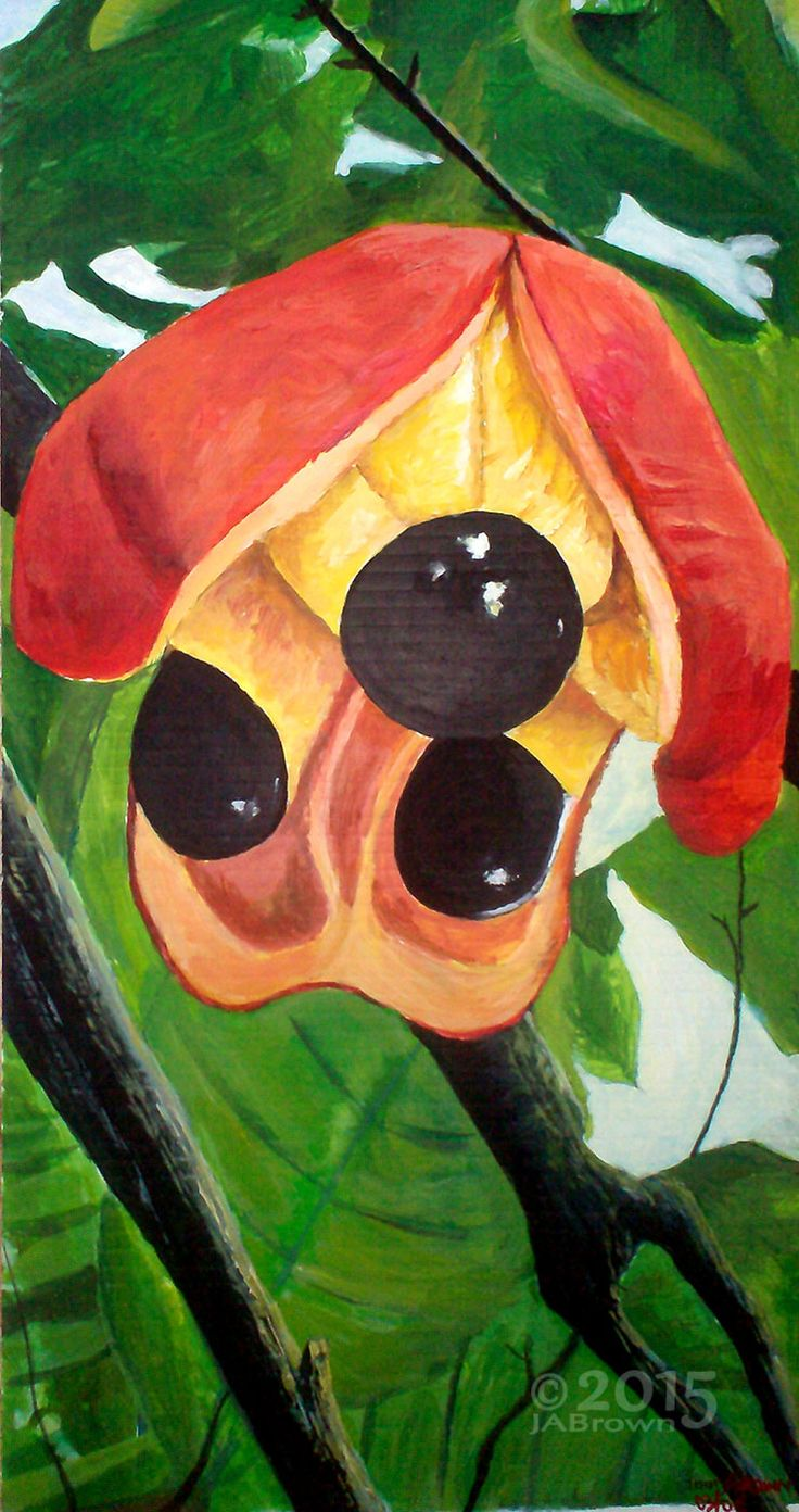 Ackee Acrylics Jamaican National Fruit By Artist Joan A