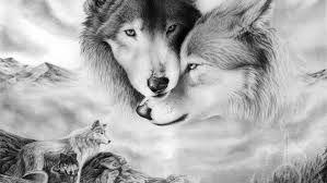 Resultado de imagem para animais fofos tumblr