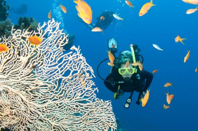 Green Group Could Save The Great Barrier Reef From 3 Million Cubic Meters Of Dredging Waste