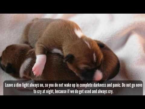 Πάνω από κορυφαίες ιδέες για Crying Puppy At Night στο - Dog escapes from kennel to comfort abandoned crying puppies