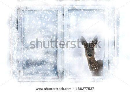 Christmas window and roe