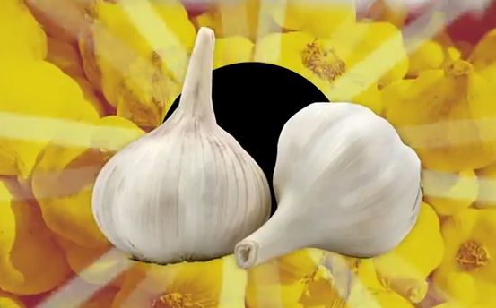 Chemists Explain How to Get Rid of Garlic Breath: Parsley and Milk...