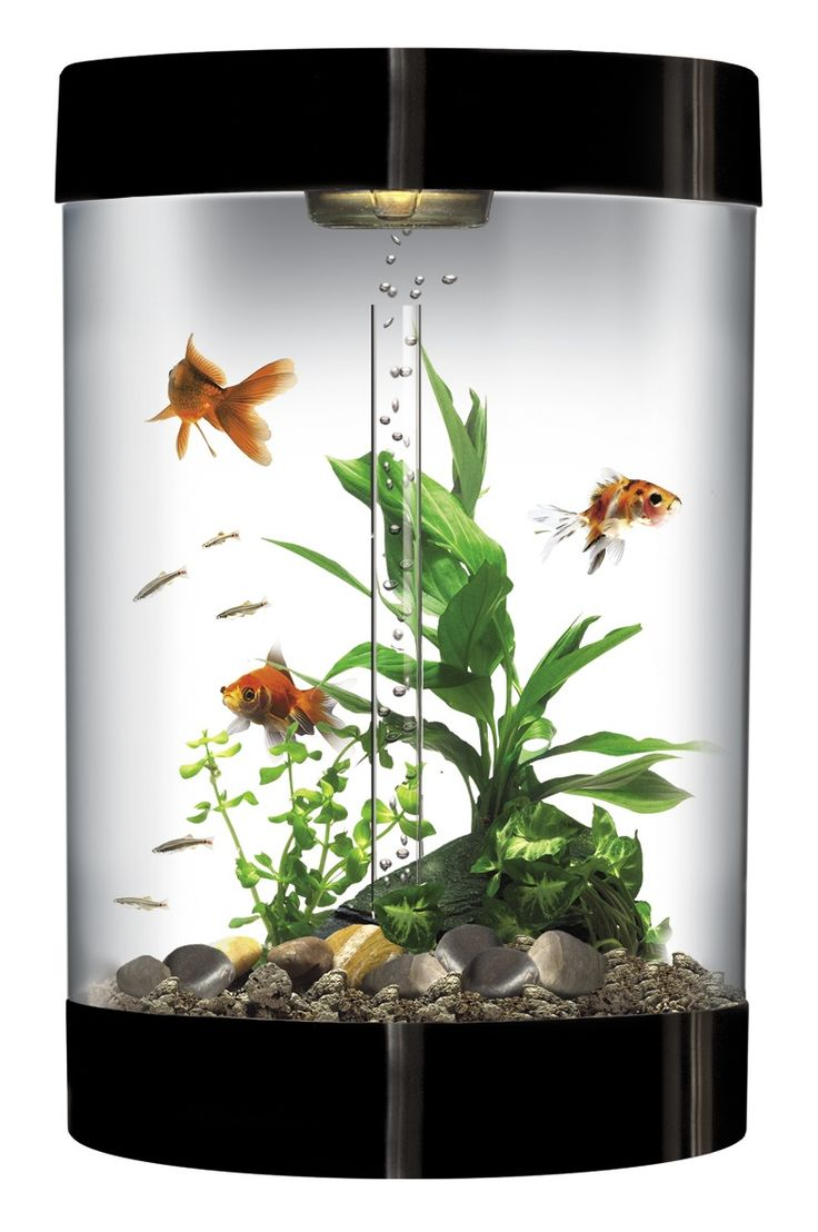 Freshwater aquarium fish buy - Do You Want To Buy Fish Tank What Is The Best One For Small