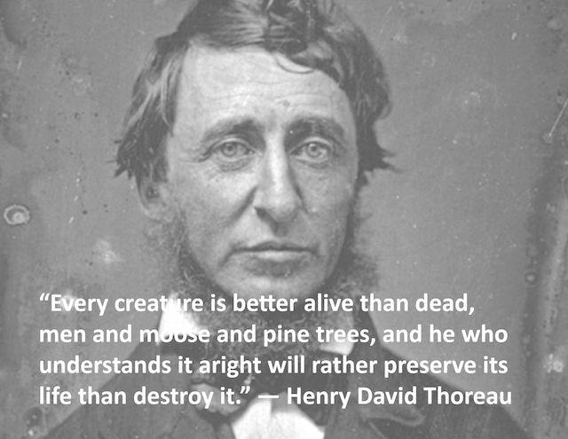 Quote Of The Day Henry David Thoreau Thoreau Henry David Thoreau Quotes Thoreau Quotes