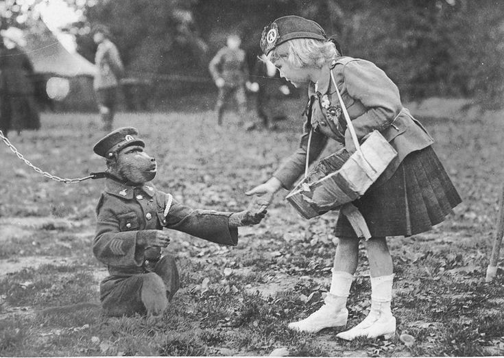 """Jackie the baboon  was not as well-known as """"Nancy"""", the springbok mascot of the 4th Regiment ( South African Scottish) of the 1st South African Infantry Brigade of World War One."""