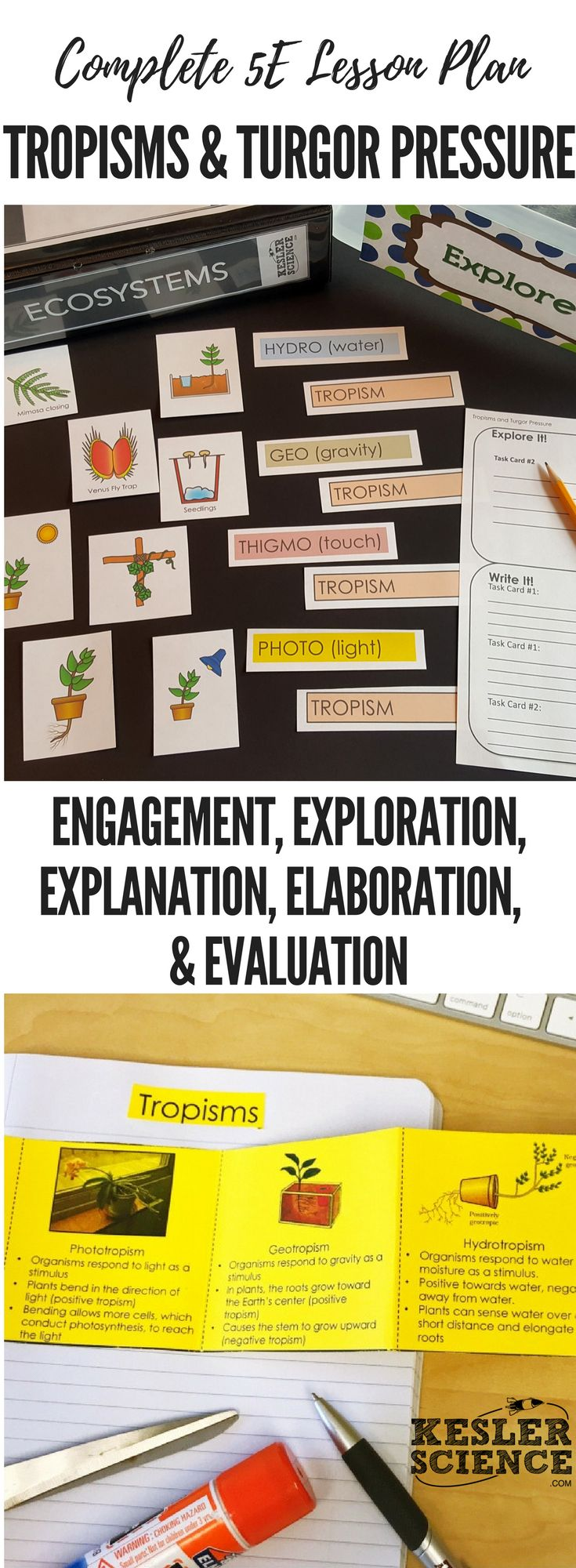 420 best environmental science images on pinterest physical tropisms and turgor pressure 5e lesson plan fandeluxe Choice Image