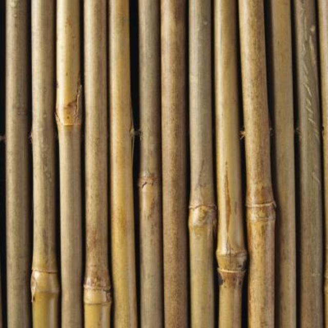 Bamboo poles are used for a variety of garden purposes.