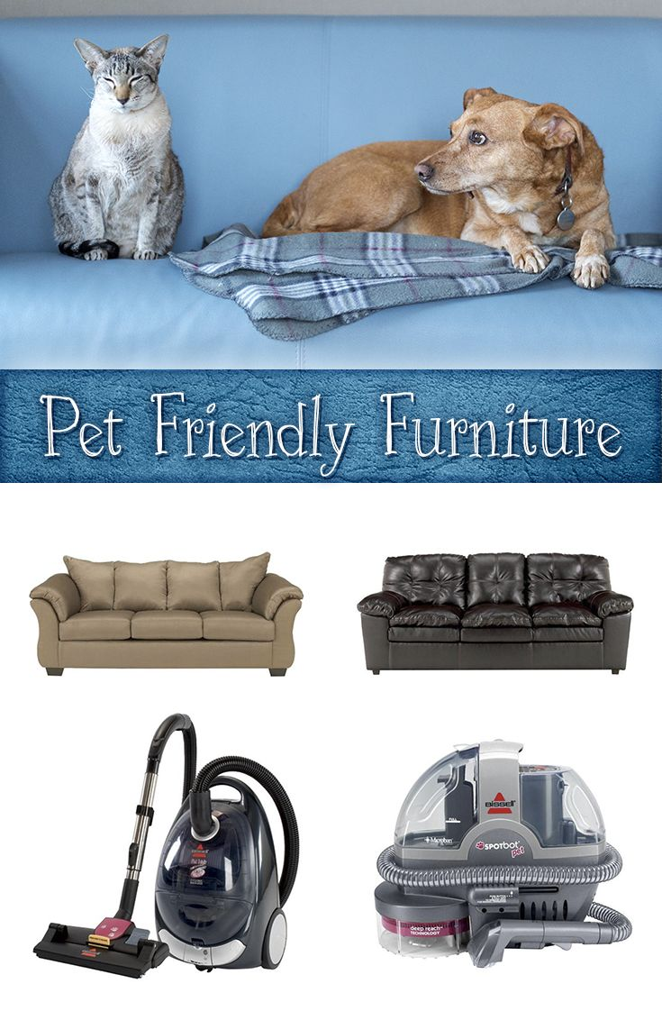 Have Pets Or A Pet Lover Get Some Times On Purchasing Pet Friendly Furniture Here Nfm