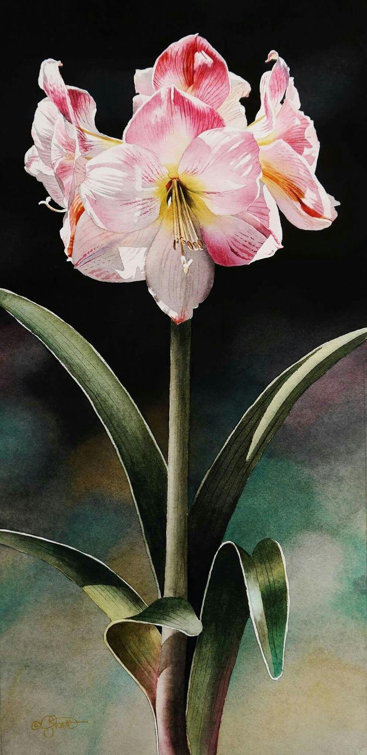 Fine watercolor art for sale - Daily Paintworks Amaryllis Original Fine Art For Sale Jacqueline Gnott