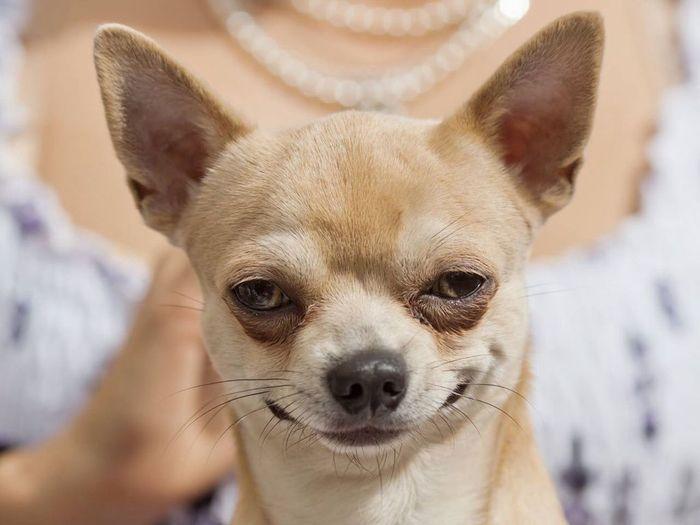 ป กพ นในบอร ด Funny Dogs