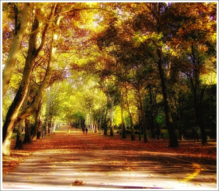 Autumn mirage