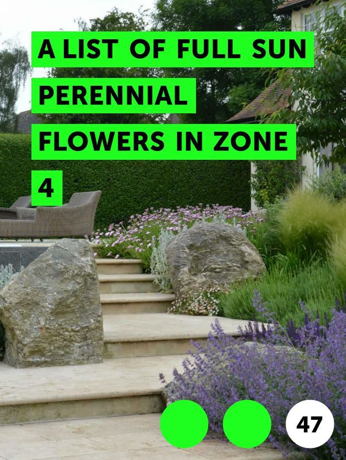 A List Of Full Sun Perennial Flowers In Zone 4 Mehrjahrige Pflanzen Sonnenpflanzen Staudengarten