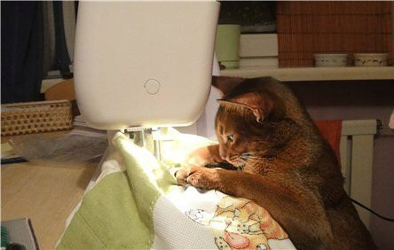 cat sewing - allergy solution