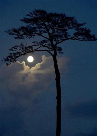 Blue moon over the pine tree in Rikuzen Takada, Japan | the only pine tree survived from Tsunami on 311.