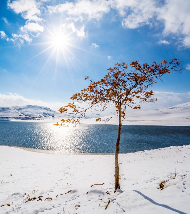 Cold but warm - I have taken this picture in a beautiful day of winter around Mahabad dam or lake in Kurdistan