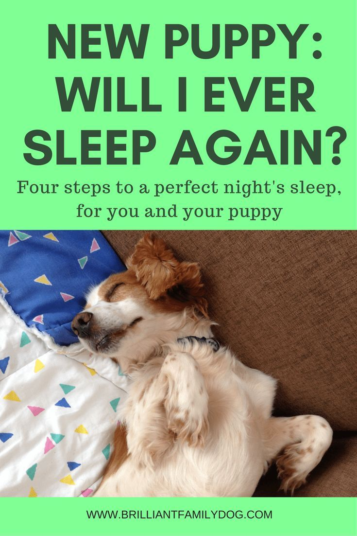 New Puppy Sleep Solutions By Brilliant Family Pet Dog Hacks To Save Your Sanity Newpuppy Dogtraining Doglovers New Puppy Sleeping Puppies Puppy Training