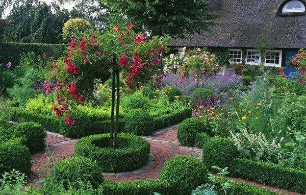 Самшит - одно из самых популярных растений для оформления сада и огорода