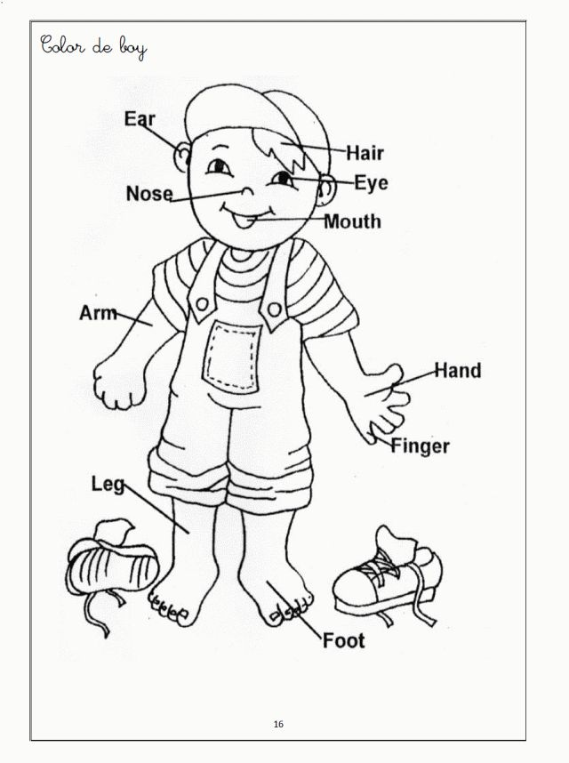 Human Body Coloring Pages For Kids C0lor 189062 Body Systems | Pre ...