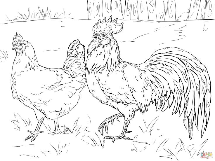 343 best Coloring Pages images on Pinterest Chicken art