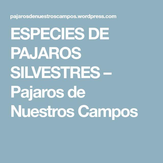 ESPECIES DE PAJAROS SILVESTRES – Pajaros de Nuestros Campos