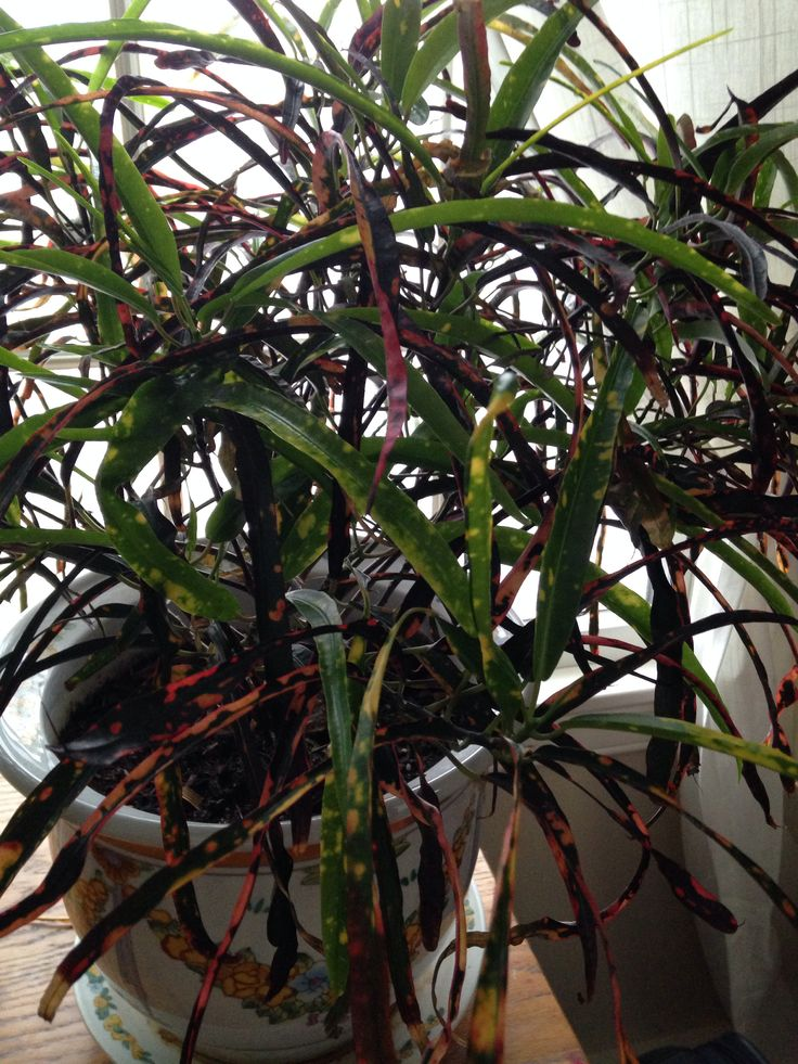 Tropical House Plant Gardening Pinterest