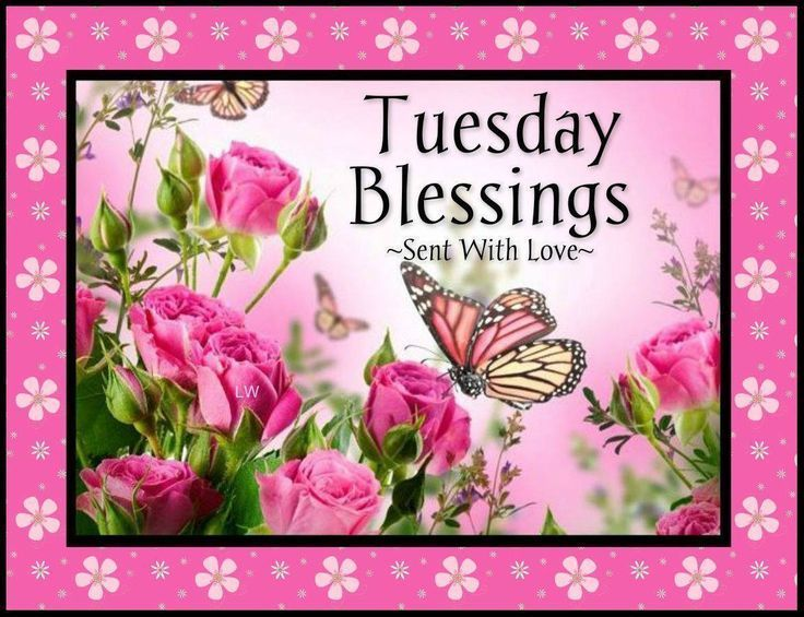 Tuesday Blessings Days Of The Week Tuesday Happy Tuesday Tuesday Greetingu2026