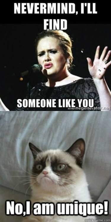 O grumpy cat you are my favorite