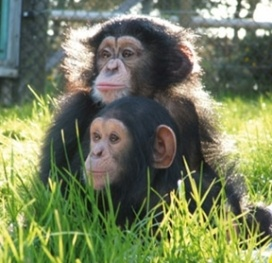The happiest place on earth...add it to your list of MUST SEE places!! : ) Monkeys at Ape Rescue Centre Monkey World in Dorset, South Coast England.
