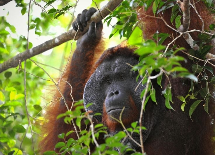 That oil palm problem - again?
