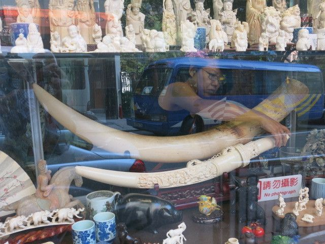 China's vow to shut down its ivory trade by the end of 2017 is a 'game changer' for elephants