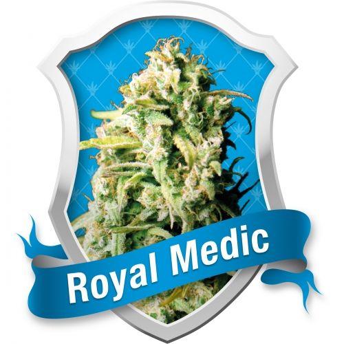 Royal Medic est une nouvelle variété hybride féminisée provenant de deux grandes variétés de cannabis originaires d'Espagne. Son patrimoine génétique est un croisement entre Critical, connue pour ses gros fruits, et Juanita la Lagrimosa, une variété connue pour ses effets médicaux.