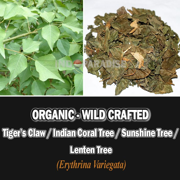 Earache, rheumatism, joint pains, wounds, antiseptic properties, eye problems, digestion, aphrodisiac, erectile dysfunctions, intestinal worms, blood purification, regulate menstruation, urinary tract infections, cystitis, obesity, fevers, skin problems, liver, nerves functions, anti-inflammatory, analgesic (pain-relieving), blood vessels, coughs, insomnia, promote lactation in breast-feeding mothers, back pain, knee pain, etc #ErythrinaVariegata #DriedHerbs #HerbalMedicine #HerbalRemedies