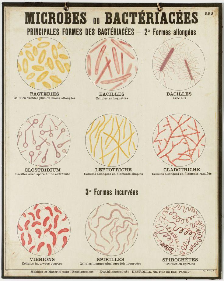 Microbes ou bactéries - Deyrolle