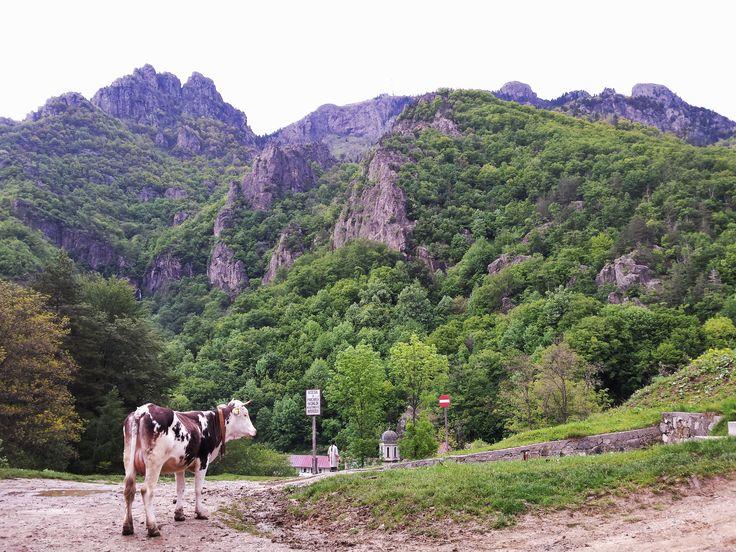 Muntele Cozia - Manastirea Stanisoara
